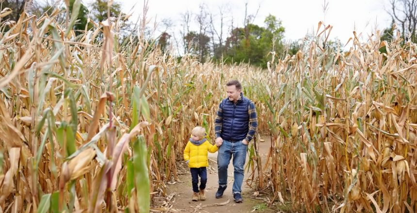 Corn mazes in Branson to take your family